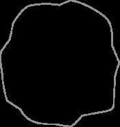 DOLPHIN GRAY